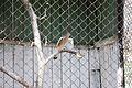 Chișinău Zoo June 2016 002.jpg