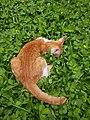 Chiang Mai kitties - 2017-07-09 (008).jpg