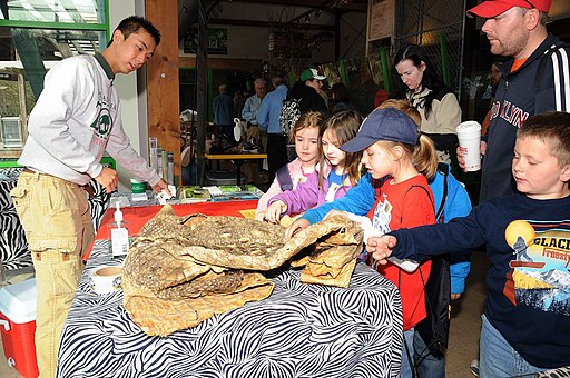 Children look at animal skins