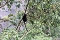 Chinnar Wildlife Sanctuary IMG 9072 (4).JPG