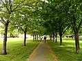 Chiswick, Avenue of Trees Across the Park - geograph.org.uk - 8969.jpg