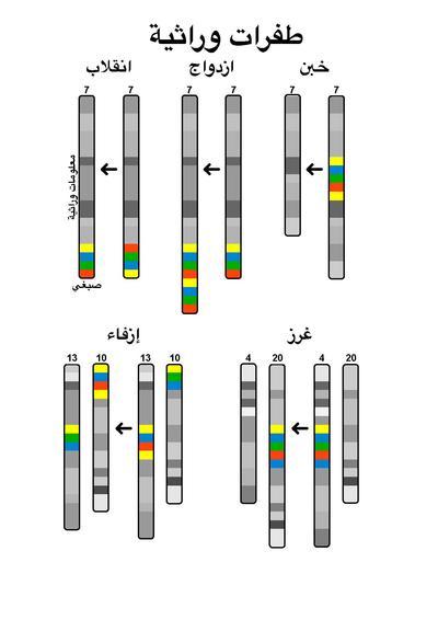كتاب المرشد في البكتيريا pdf