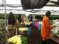 Chrysanthemum field.jpg