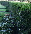 """Church garden at """"Danderyds kyrka"""" (3681142746).jpg"""