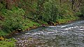 Clackamas Wild and Scenic River (27727579550).jpg