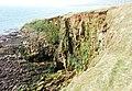 Coastal erosion - geograph.org.uk - 1267505.jpg