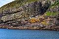 Coastline St John Newfoundland (40469635225).jpg
