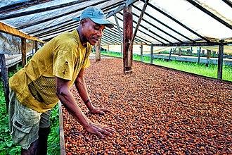 Economy of São Tomé and Príncipe - Image: Coffee Grower