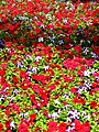 Colores - panoramio (3).jpg
