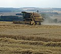 Combining Barley on Horkstow Wolds - geograph.org.uk - 2004065.jpg