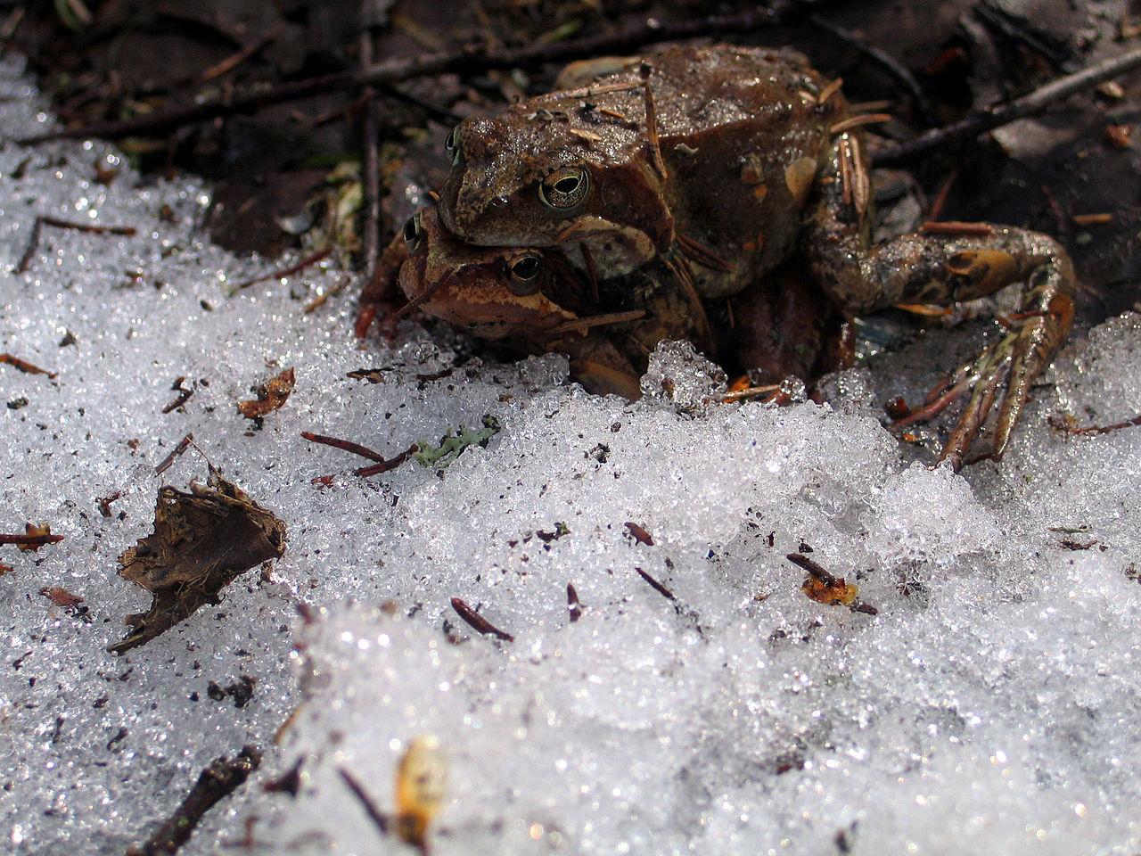 Секс с мобильного с жабой фото 167-925