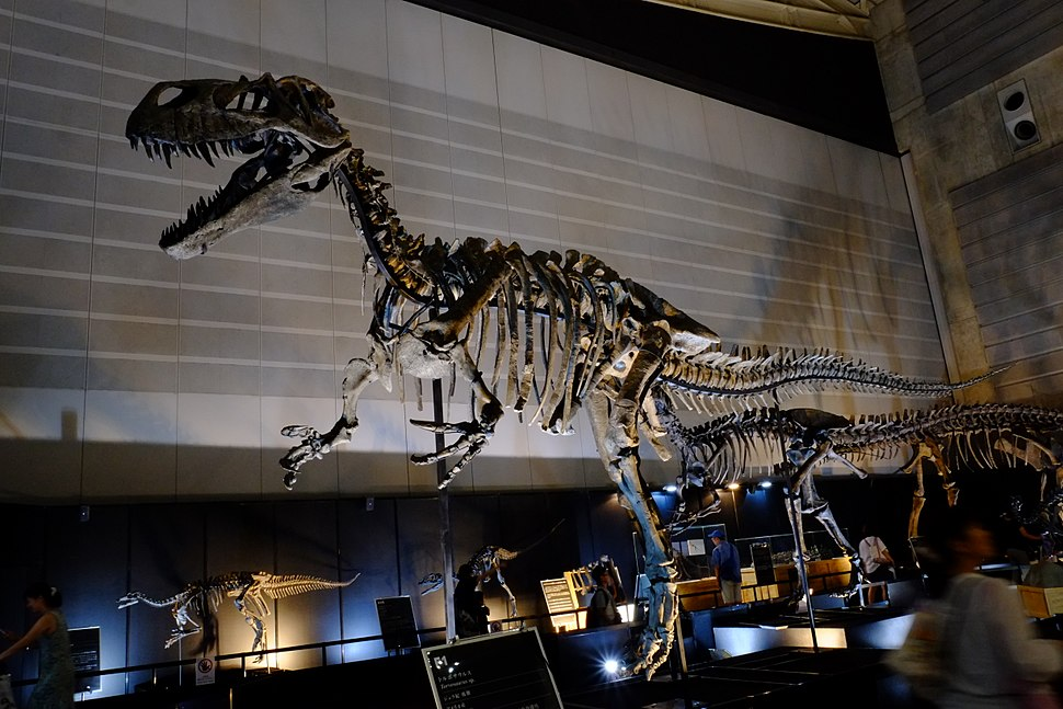 Complete skeleton of Torvosaurus