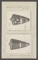Conus maldivus - - Print - Iconographia Zoologica - Special Collections University of Amsterdam - UBAINV0274 086 07 0050.tif