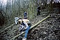 Coppicing in Hadleigh Country Park - geograph.org.uk - 1567792.jpg