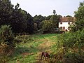 Cottage at Pound Green Common - geograph.org.uk - 1079394.jpg