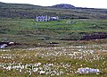 Cottongrass and derelict houses in North Uist - geograph.org.uk - 483035.jpg