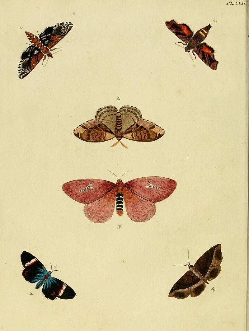 Cramer&Stoll-uitlandsche kapellen vol. 2- plate 107.jpg