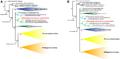 Crocodylia Phylogeny Blanco et al 2014 Fig. 8.png