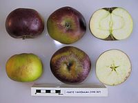 Cross section of Fekete Tanyeralma, National Fruit Collection (acc. 1948-367).jpg