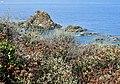 DSCN9145 punta falcone la flora si fonde con il mare.jpg