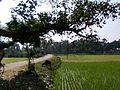 Dakkhin Sreerpur(05).jpg