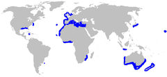 Range of the kitefin shark