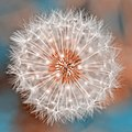 Dandelion Plasma (19526570282).jpg