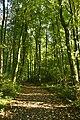 Dans le bois du domaine (22801630593).jpg