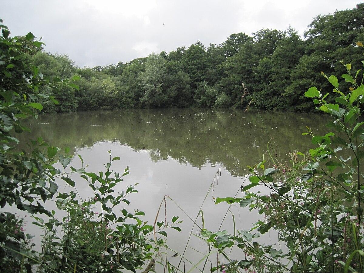 Image result for darlands lake