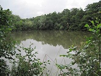 Darland's Lake Nature Reserve - Darland's Lake