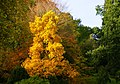 Dartington autumns colours-32.jpg