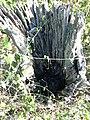 Dead tree3.jpg