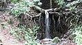 Deep Forests @ Ponmudi Hills - panoramio (1).jpg