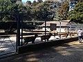 Deer Garden in Kashima Shrine.JPG