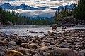 Deer crossing, Banff National Park.jpg