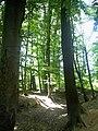 Denzlingen Wald - panoramio (3).jpg