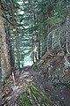Descente dans la forêt - panoramio.jpg