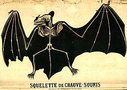 Croquis de squelette