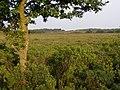 Dibden Bottom, New Forest - geograph.org.uk - 203822.jpg