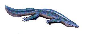 Eogyrinidae - Image: Diplovertebron BW