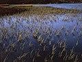 Dock Tarn, Watendlath Fell - geograph.org.uk - 904862.jpg