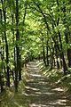 Dolní Břežany, Závist, cesta na akropoli.jpg