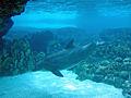 Dolphin artificial habitat.jpg