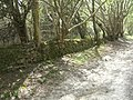 Dry Stone Wall - geograph.org.uk - 408320.jpg