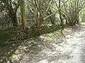 Dry Stone Wall - geograph.org.uk - 408320.jpg
