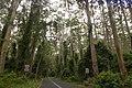 Durras North NSW 2536, Australia - panoramio.jpg