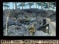 ETH-BIB-Ischia, Baugrube im Pineto der Lava dell'Arso-Dia 247-16219.tif