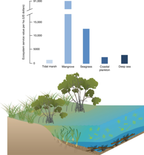 Blue carbon The carbon captured by the worlds marine ecosystems