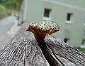 Ein Pilz im Tal der Feitelmacher, Trattenbach (5).jpg