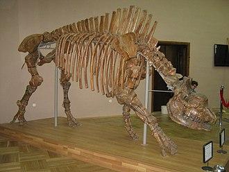 Elasmotherium - Reconstructed E. caucasicum skeleton, Azov History, Archaeology and Paleontology Museum-Reserve